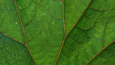 How to get rid of your green congeal
